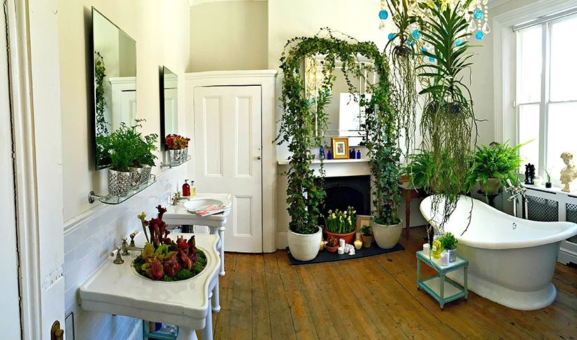 The Best Household Plants For The Bathroom  Kitchen Cabinet Kings Blog
