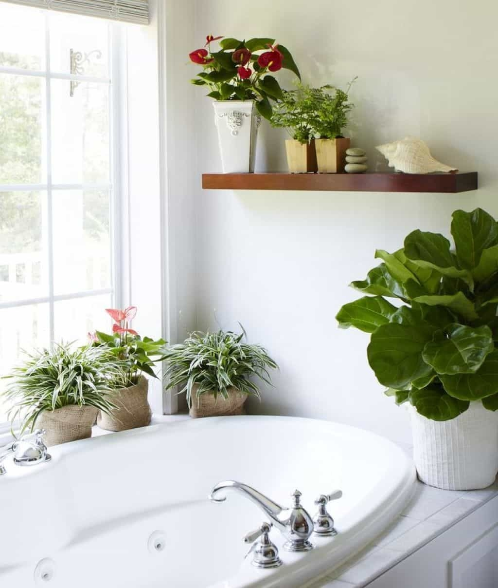 Where To Put Houseplants  Wearefound Home Design
